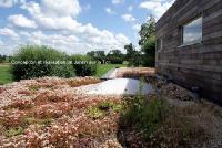toiture végétale semi  extensive maison passive