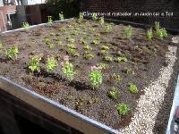Toiture végétale extensive lille