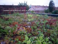 Toiture végétale semi intensive extension maison