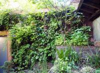 Mur végétal en été